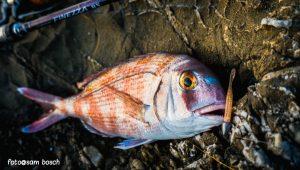 Darting, estrategia original para spinning en el mar
