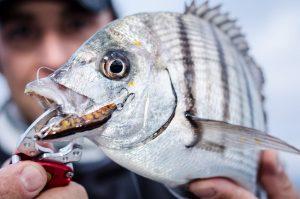 Rockfishing, ajing, light spinning, hard rock, técnica y cañas